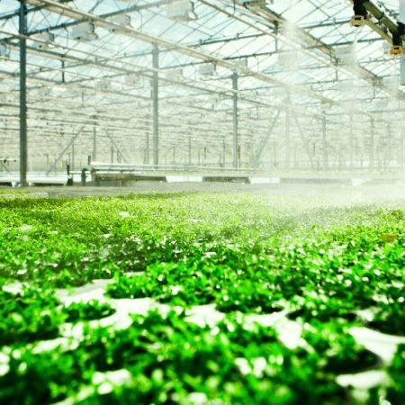Horticulture & Hydroponics